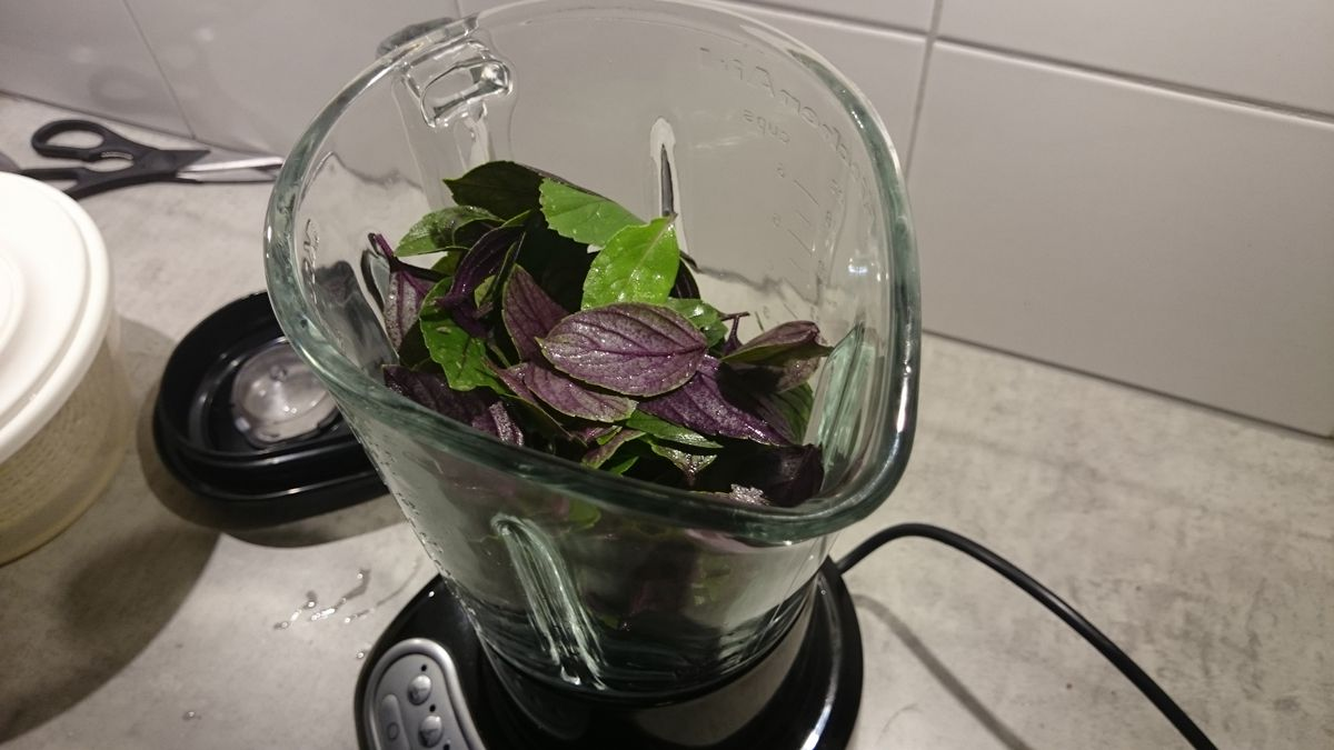 dry basil 13 - How to dry basil
