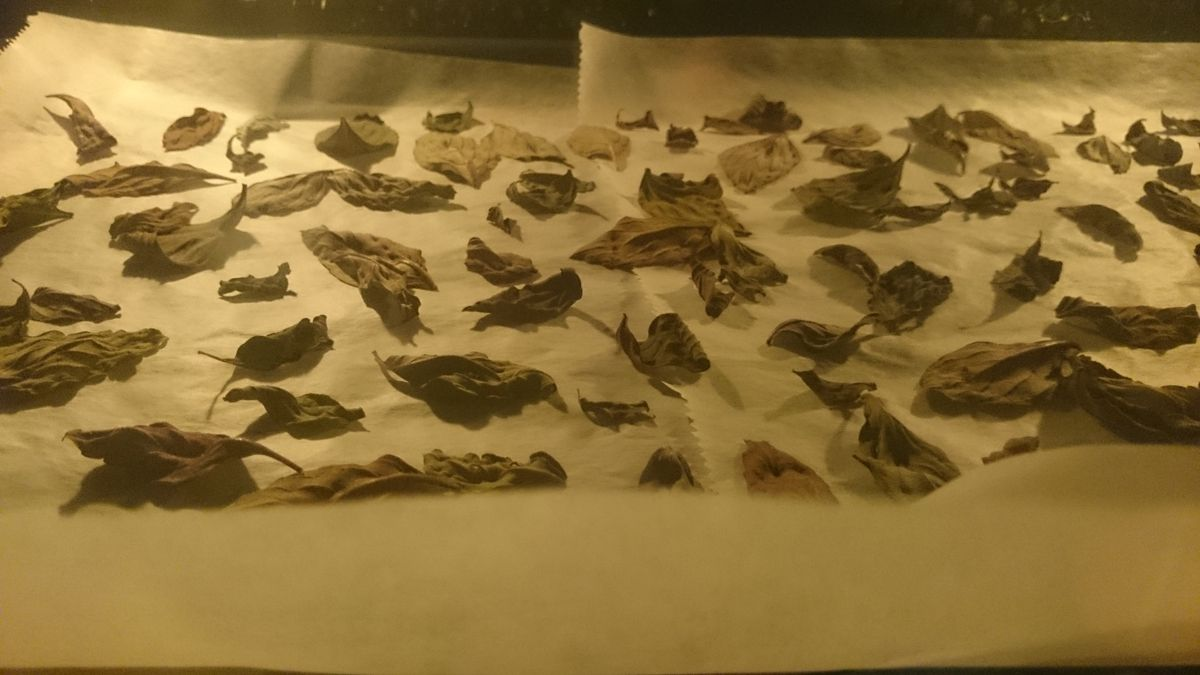 Drying basil leaves in an oven