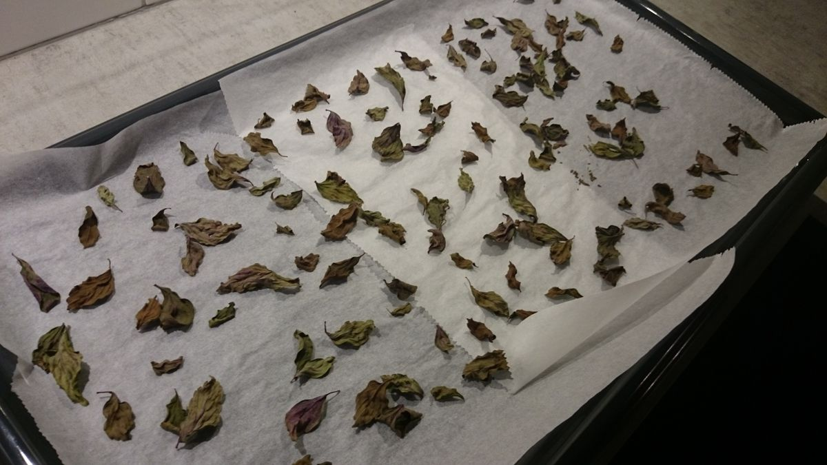 Dried basil leaves from an oven